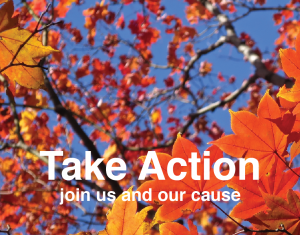take action to eliminate gas powered leaf blowers