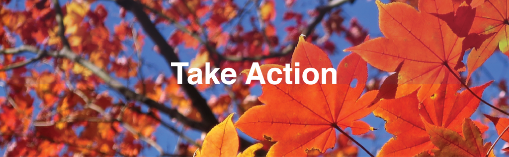 Take Action to eliminate gas leaf blowers